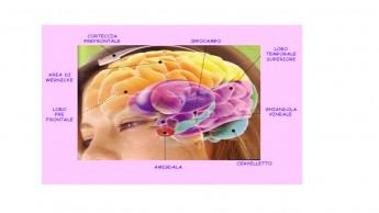 cervello sito
